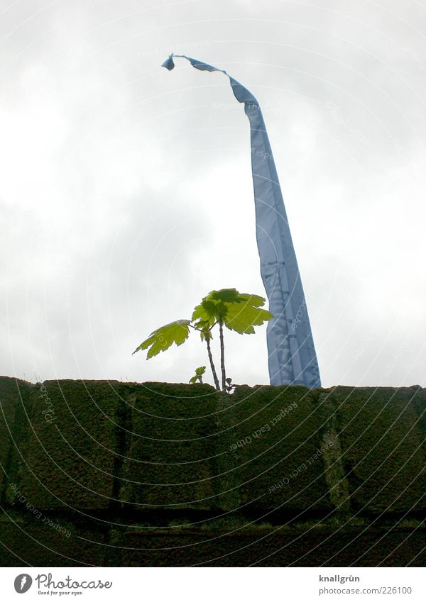Sky Nature Green Blue Tree Plant Clouds Leaf Dark Wall (building) Environment Above Wall (barrier) Bright Brown Power