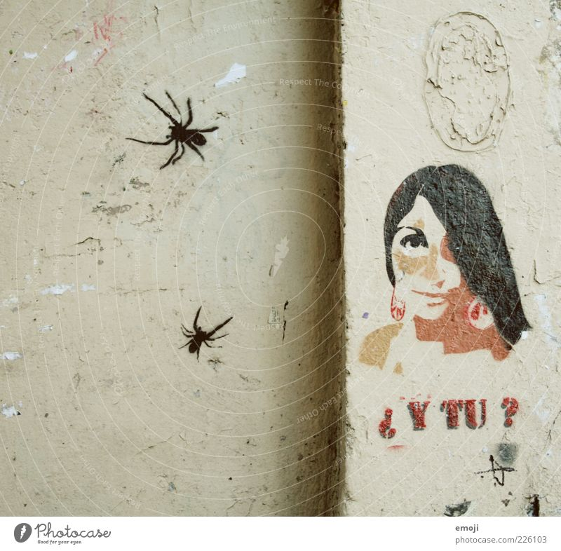 spiders Feminine Young woman Youth (Young adults) 1 Human being 18 - 30 years Adults Wall (barrier) Wall (building) Facade Old Spider Graffiti French Comic