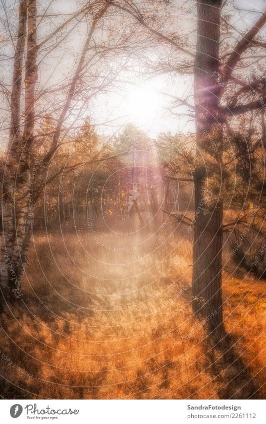 Nature Plant Colour Landscape Sun Relaxation Calm Forest Warmth Yellow Environment Autumn Emotions Tourism Orange Moody