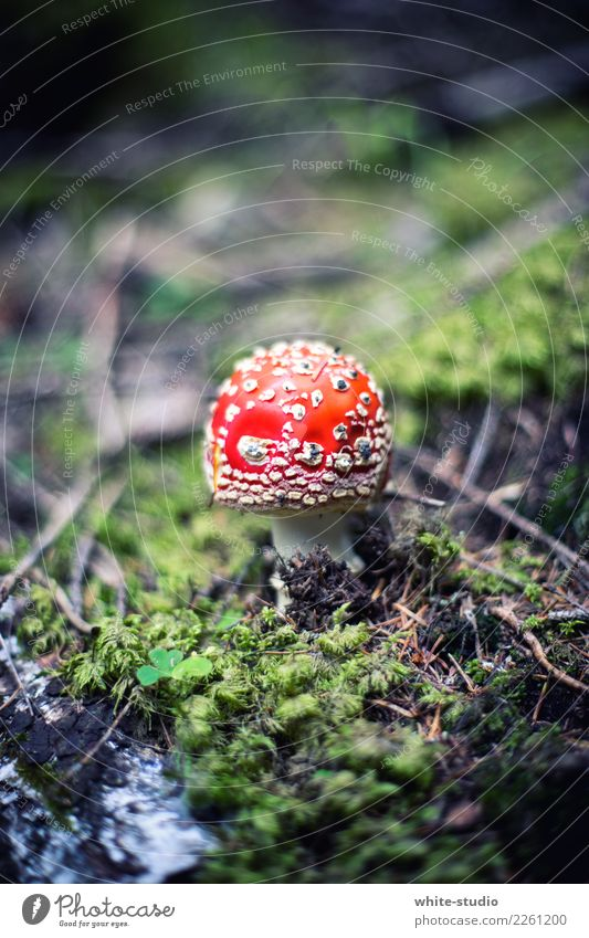 Mushroom with flies Plant Environment Amanita mushroom Red Moss Woodground Poison Mushroom cap Colour photo