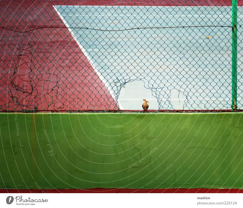 Green Animal Sand Wall (barrier) Bird Pink Broken Cool (slang) Observe Hollow Audience Tennis Attentive Barrier Sporting grounds Structures and shapes