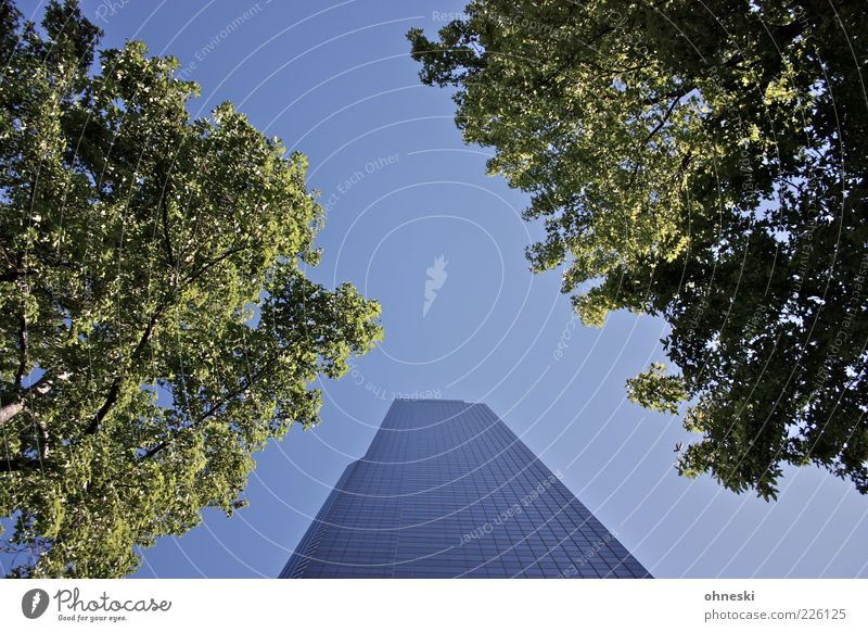 Columbia Tower Air Cloudless sky Beautiful weather Tree Leaf Seattle House (Residential Structure) High-rise Manmade structures Architecture Blue Green Tall
