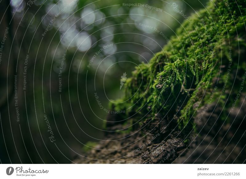 Moss up close on an old tree Nature Plant Spring Summer Autumn Winter Forest Virgin forest Old Elegant Natural Green Optimism Determination Tree Colour photo