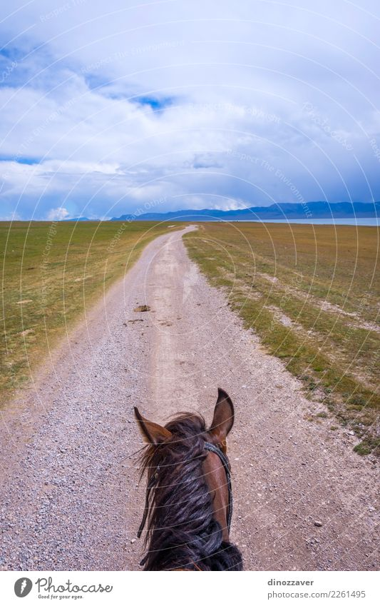 From the horse back, Kyrgyzstan Lifestyle Leisure and hobbies Vacation & Travel Summer Mountain Sports Nature Landscape Animal Grass Park Meadow Lake Transport