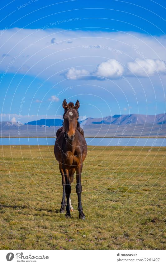Horse by Song Kul lake Beautiful Vacation & Travel Tourism Summer Mountain Nature Landscape Sky Clouds Fog Grass Park Meadow Hill Rock Lake Herd Natural Blue