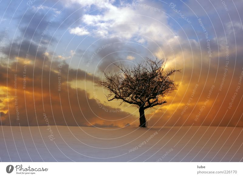 singletree Vacation & Travel Freedom Winter Environment Nature Landscape Sky Weather Emotions Loneliness Tree Dusk Colour photo Exterior shot Copy Space bottom