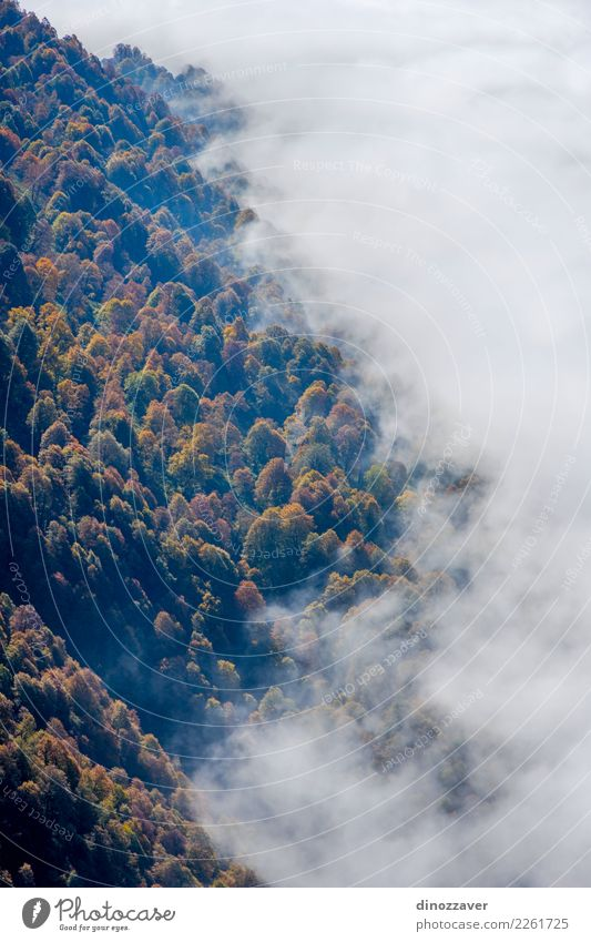 Autumn forest thru the clouds from above Beautiful Sun Mountain Environment Nature Landscape Plant Clouds Fog Tree Leaf Park Forest Bright Natural Wild Brown