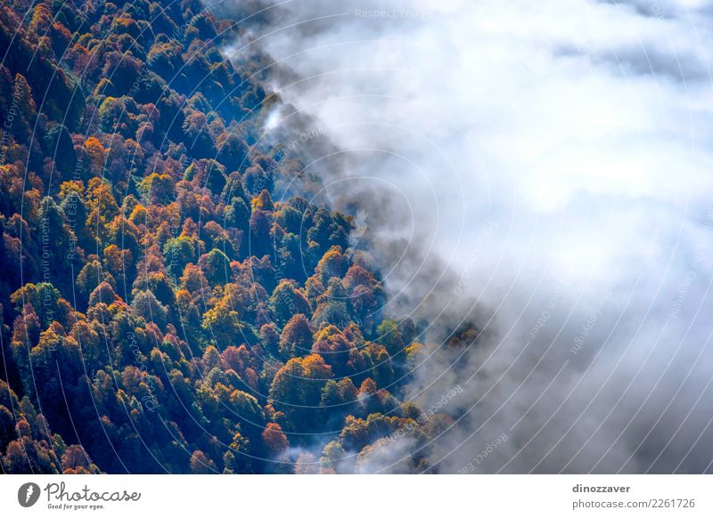 Autumn forest thru the clouds from above Nature Plant Colour Beautiful Green White Landscape Sun Tree Red Leaf Clouds Forest Mountain Yellow Environment