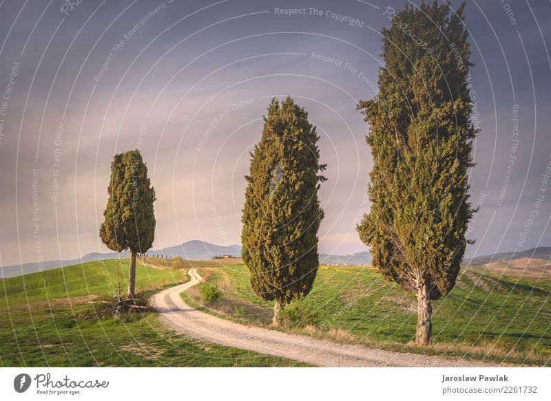 Tuscany trees between road Nature Landscape Plant Cloudless sky Clouds Sunrise Sunset Spring Weather Meadow Field Hill Adventure Relaxation Colour