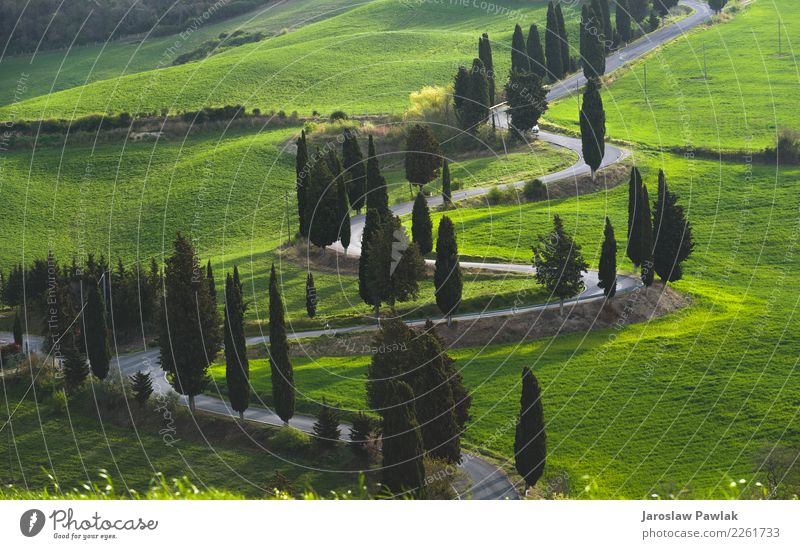 Landscape Road in Tuscany Vacation & Travel Summer Green Tree Spring Meadow Emotions Moody Field Adventure Italy Lightning Roadside