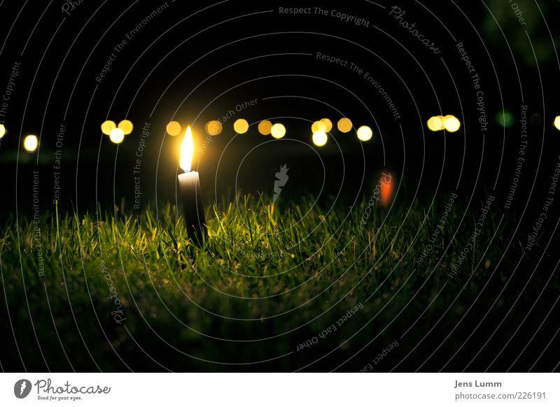 Green Summer Calm Yellow Dark Meadow Grass Lamp Feasts & Celebrations Blaze Candle Burn Event Flame Blade of grass Candlelight