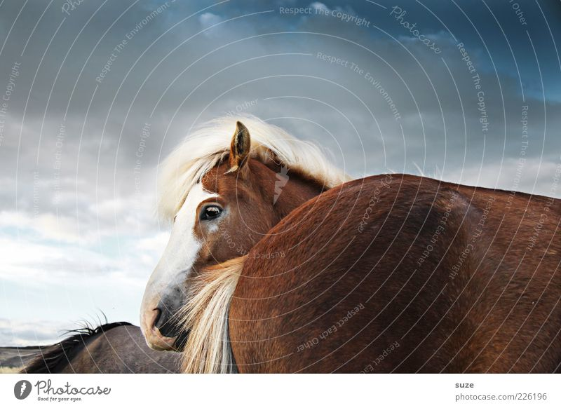 Sky Nature Animal Clouds Landscape Moody Natural Wind Wild animal Wait Stand Esthetic Cute Horse Friendliness