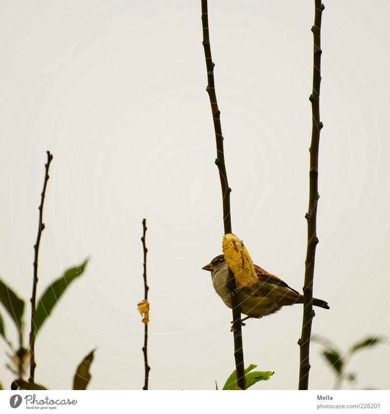 Nature Plant Leaf Winter Animal Autumn Environment Gray Small Bird Sit Natural Gloomy Bushes Cute To hold on