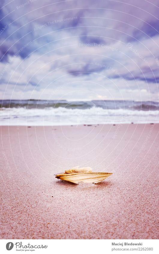 Broken shell on a beach Vacation & Travel Freedom Summer Summer vacation Beach Ocean Wallpaper Nature Sand Sky Clouds Sadness Emotions Serene Love affair