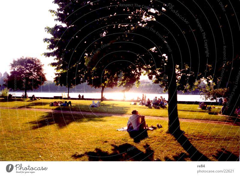 White Tree Sun Green Black Meadow Grass Cologne Rhine