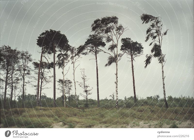 rich variety Environment Nature Landscape Clouds Wind Gale Tree Grass Meadow Baltic Sea Esthetic Movement Loneliness Mysterious Calm Beautiful Birch tree Pine