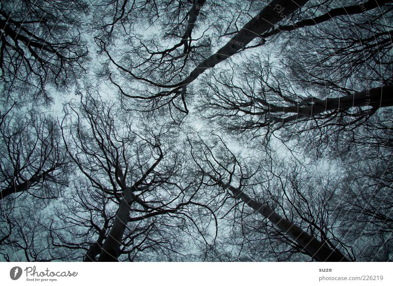 afraid of heights Winter Environment Nature Tree Forest Network Growth Exceptional Dark Fantastic Large Creepy Cold Wild Sadness Loneliness Fear Fear of death
