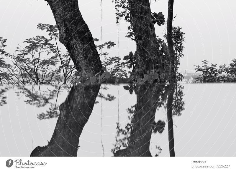 Sky Nature Water Tree Plant Calm Garden Coast Island Bushes Asia Lakeside Tree trunk Harmonious Black & white photo Singapore