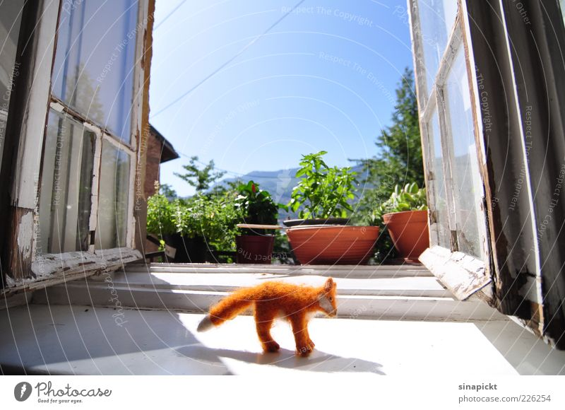fox visit Joy Flat (apartment) Decoration Pot plant Window Fox 1 Animal Cuddly toy Living or residing Authentic Smart Moody Colour photo Interior shot Deserted
