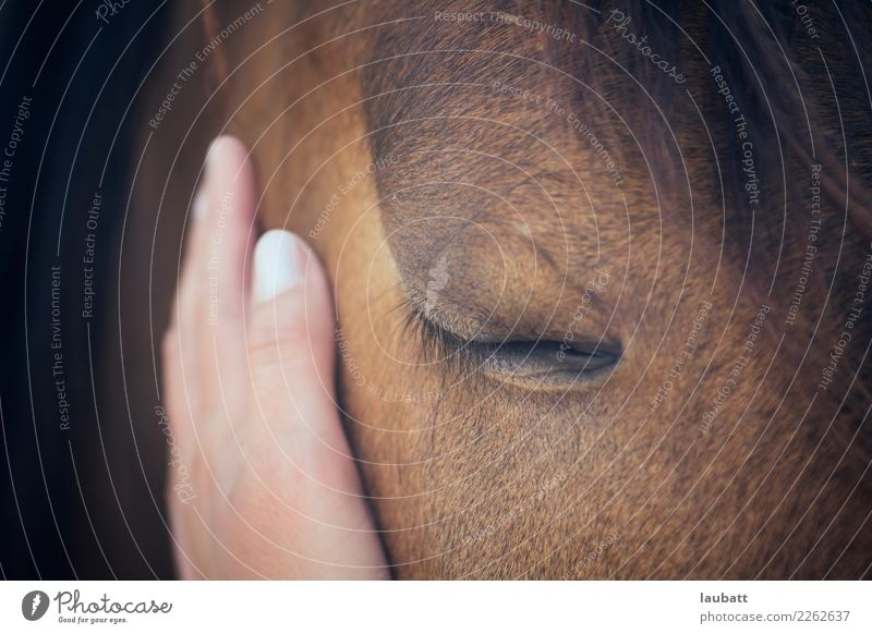 Tenderness Nature Hand Animal Joy Religion and faith Eyes Love Happy Friendship Wild animal Idyll To enjoy Future Help Hope Protection