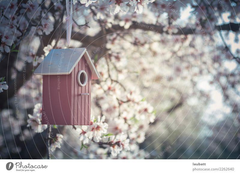 Sakura birdhouses Lifestyle Wellness Well-being Relaxation Calm Meditation Cure sakura Cherry Blossom Festival Environment Nature Air Spring Weather