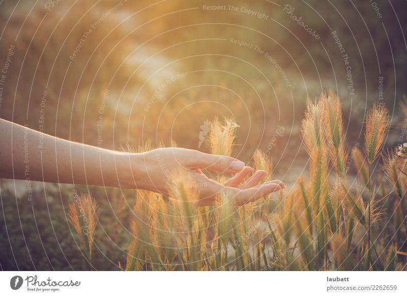 All about the Summer light Woman Nature Hand Relaxation Calm Adults Life Healthy Health care Contentment Growth Wellness Well-being Harmonious Trust Meditation