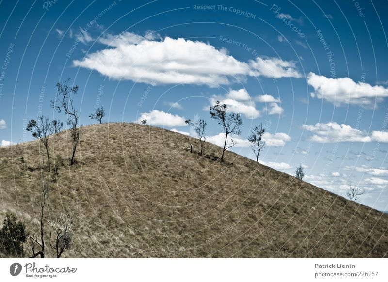 DAYDREAMING Environment Nature Landscape Sky Clouds Sunlight Summer Climate Weather Beautiful weather Plant Tree Bushes Meadow Hill Mountain Tall Round