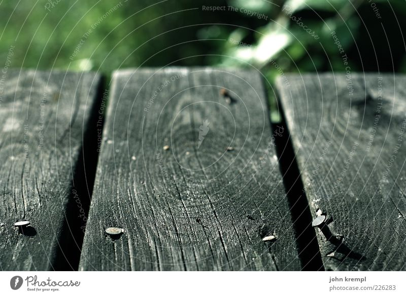 Living On The Edge Nature Wood Old Gray Green Wooden board Ground Nail Wood grain Annual ring Shallow depth of field Deserted Close-up Detail Exterior shot