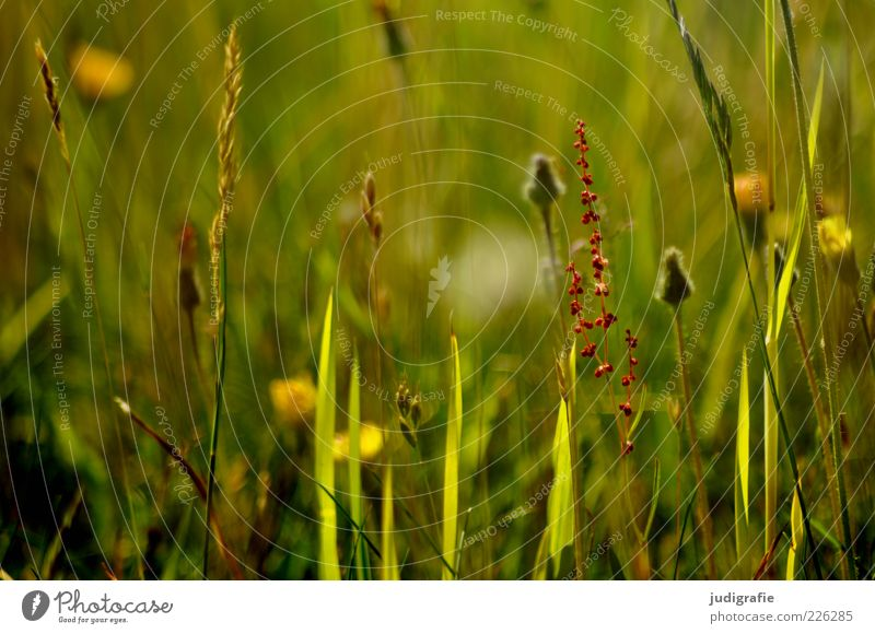 meadow Environment Nature Plant Summer Grass Wild plant Meadow Growth Fragrance Natural Green Colour photo Exterior shot Day Deserted