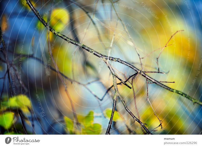Colourful branches Nature Summer Autumn Tree Leaf Twigs and branches Deciduous tree Autumnal Illuminate Fantastic Natural Beautiful Blue Growth Colour photo