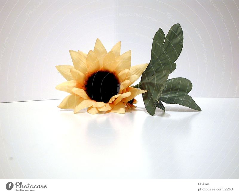Sunflower Flower Green Plant Yellow Lie Decoration Living or residing Cloth Plastic Dry Symmetry Original Textiles Stagnating Blossom leave