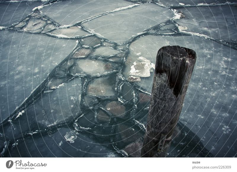 blunt Water Ice Frost Baltic Sea Ocean Wood Dark Cold Loneliness Frozen surface Ice sheet Pole Wooden stake Jetty Winter Colour photo Subdued colour