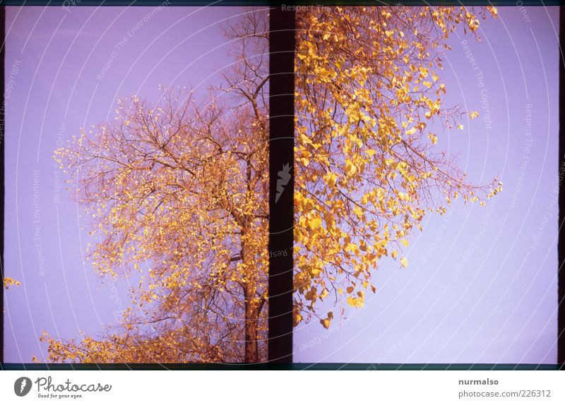 Sky Nature Tree Plant Leaf Autumn Environment Landscape Moody Art Modern Crazy Climate Uniqueness Change Past