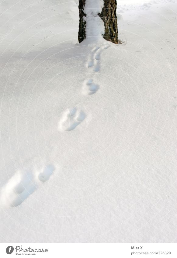Tracks in the snow Winter Snow Tree Animal tracks Cold Tree trunk Colour photo Exterior shot Deserted Copy Space bottom Snow track Mysterious Vanished