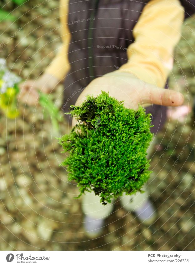 Human being Child Hand Green Movement To hold on Discover Collection Indicate Moss Build Gardening Children's game Woodground Weed Love of nature