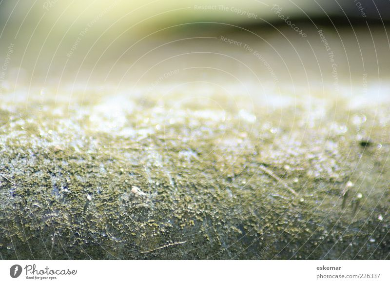 abstract Elements Esthetic Authentic Dry Under Green White Bizarre Colour Mysterious Calm Transience Abstract Structures and shapes Blur Neutral Nature Close-up