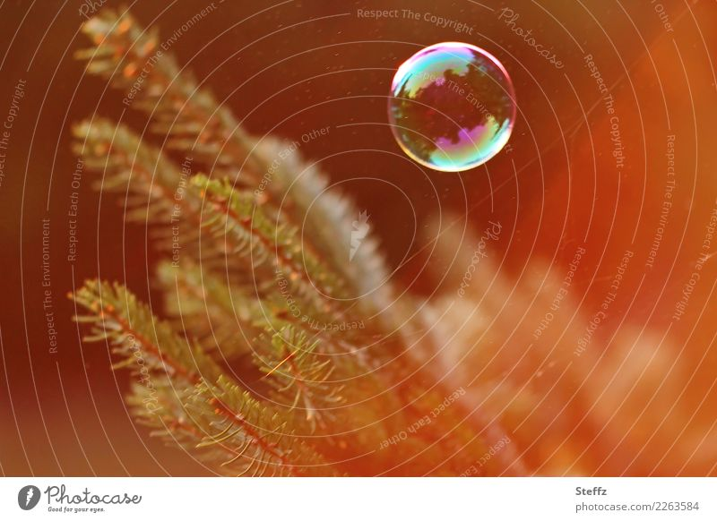 Nature Plant Beautiful Orange Twig Ease Fir tree Hover Easy Soap bubble Flare Fir needle Encounter Shaft of light Fir branch Approach