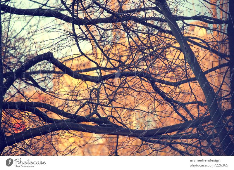 branch Tree Strong Branch Twigs and branches Branched Deserted Branchage Colour photo Exterior shot Evening Contrast Silhouette Blur