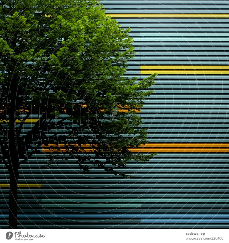 differential geometry Environment Summer Tree Manmade structures Building Facade Esthetic Green Geometry Line Structures and shapes Colour photo Exterior shot