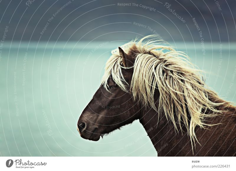 Nature Ocean Animal Environment Coast Horizon Dream Moody Natural Wind Wild animal Wait Stand Esthetic Horse
