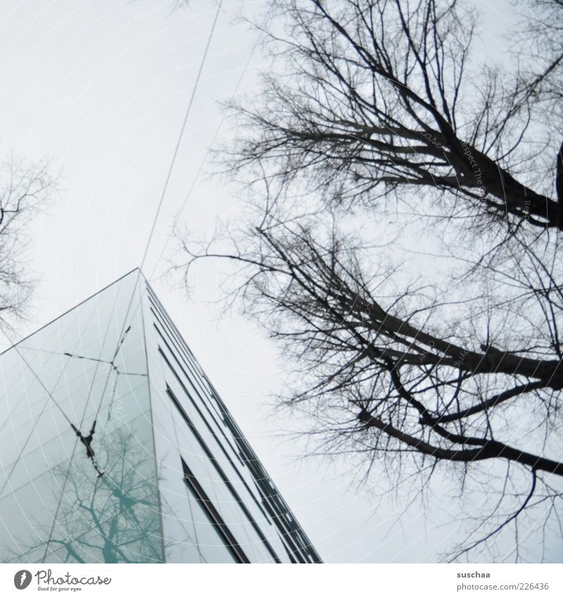 Sky Tree Winter House (Residential Structure) Dark Cold Window Gray Architecture Building Corner Point Branch Wire Symmetry Leafless