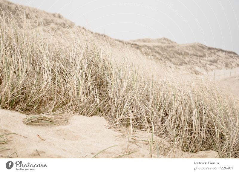 Time for yourself Environment Nature Landscape Plant Earth Sand Air Weather Wind Coast Beach Ocean Soft Moody Amrum marram grass Dune Beach dune Hill Smooth