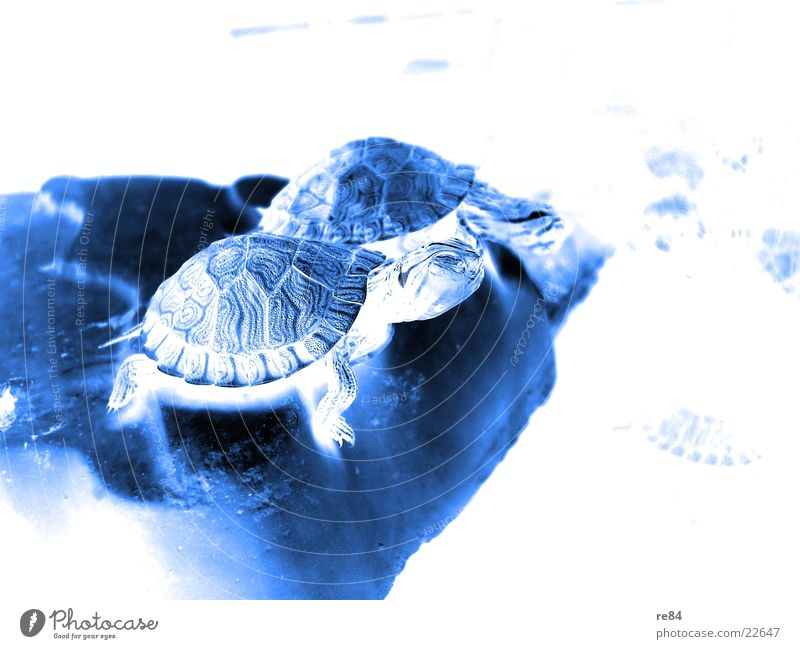 Water Old Animal Life Small Signs and labeling Swimming & Bathing Wild animal Americas Aquarium Crawl Feeding Turtle Armor-plated Rocker Finding Nemo