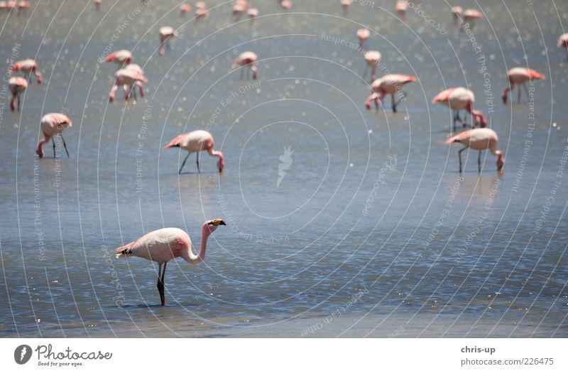 Nature Water Blue Far-off places Animal Environment Landscape Coast Lake Bird Pink Wild animal Group of animals Wing Many Lakeside