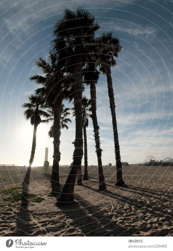 Sky Nature Sun Beach Ocean Clouds Relaxation Sand Coast Tall USA Footprint Americas Beautiful weather Palm tree California