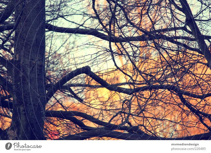 Nature Tree Beautiful Elements Strong Beautiful weather Fat Tree trunk Gorgeous Twigs and branches Branched Retro Colours