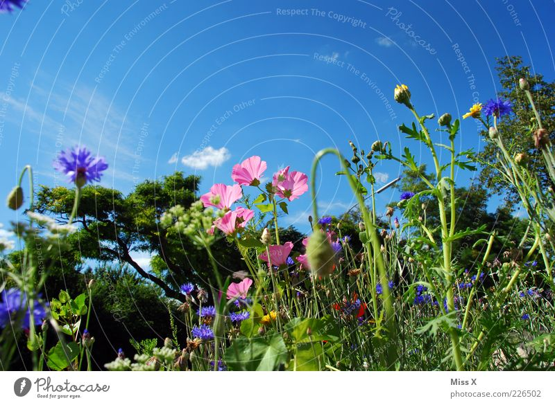 summer meadow Environment Nature Plant Cloudless sky Summer Beautiful weather Flower Grass Leaf Blossom Meadow Blossoming Fragrance Growth Multicoloured