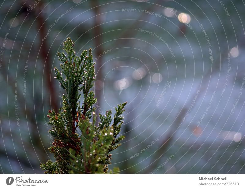 Nature Green Tree Calm Wet Natural Point Partially visible Coniferous trees Fir branch