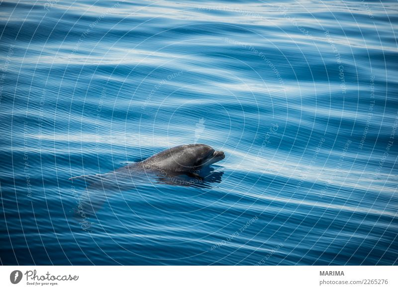 wild dolphin Vacation & Travel Tourism Summer Sun Beach Ocean Island Waves Nature Animal Navigation Boating trip Fishing boat Wild animal 1 Swimming & Bathing