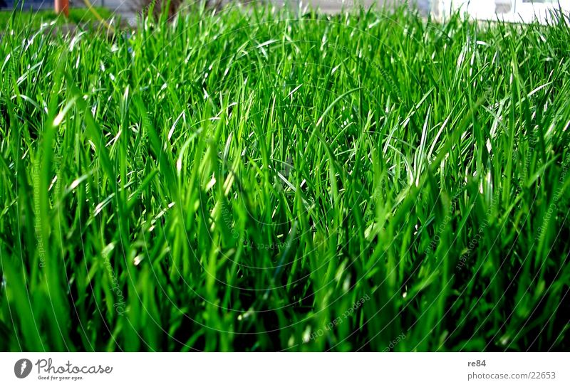 green side of life Grass Green Oxygen Photosynthesis Ant Insect Near Zoom effect Summer Spring Flat (apartment) Beautiful Maturing time Growth Damp Dry Nature